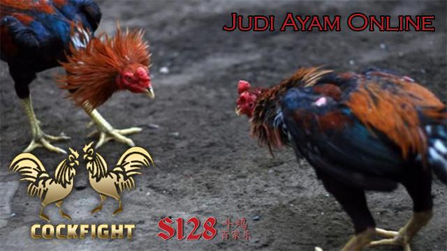 Keuntungan Jutaan Rupiah Sabung Ayam s1288 Jakarta